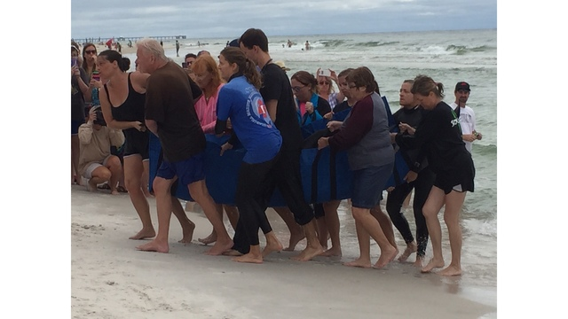 UPDATE: Whale Euthanized After Washing Up in Gulf Shores