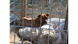Deputies Bust Large Dog Fighting Ring on AL/MS State Line