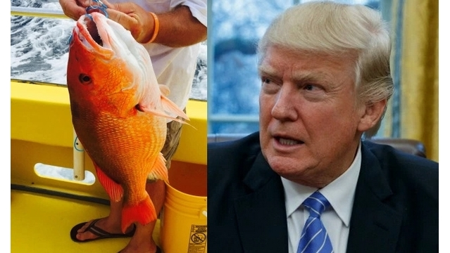 Trump administration sued for longer red snapper season on Gulf Coast