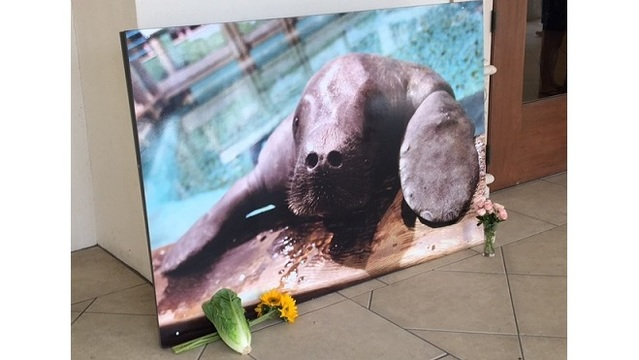 Man Petitions to Have Statue of Beloved Manatee Replace Confederate Monument