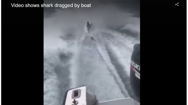 FWC charges 3 in connection to shark dragging video