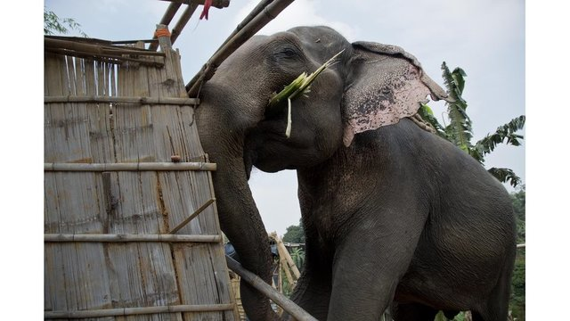 Indian police use elephants to clear their protected habitat