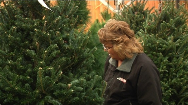 tips to make your christmas tree last - How Long Can A Christmas Tree Last