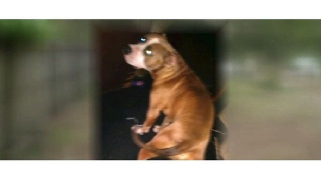 Cops: Dog shot in face by car thieves, pup struggling to survive