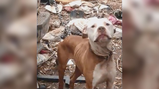 Viral Facebook post prompts local rescue group to move on a dog chaining ban