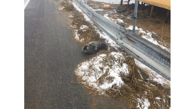Baby seal rescued after found on side of road