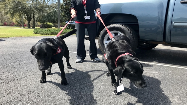 Therapy dogs cheering up students recovering from fatal bus crash in Alabama