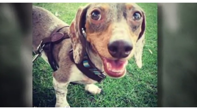 Dog killed while in care of sitter found on Rover app