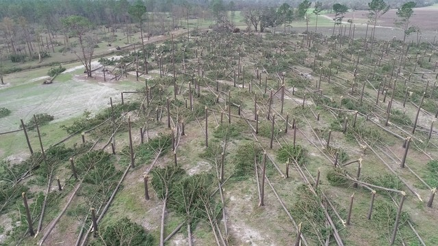 Timber downed in Alabama by Hurricane Michael